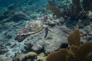 Protect your skin AND coral reefs with reef-safe sunscreen | photo credit: Neil Osborne / SEE Turtles
