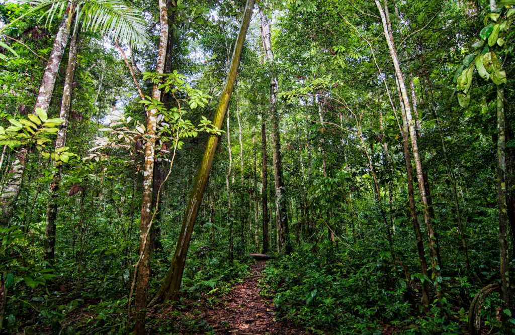 A forest trail in the Amazon Rainforest. Photo by Marco Simola for Center for International Forestry Research (CIFOR)