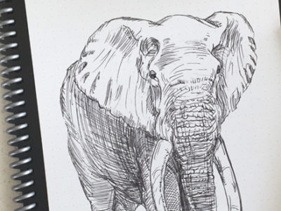 Elephanst Drawing