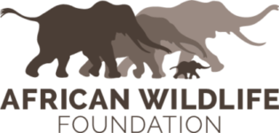 African-Wildlife-Foundation