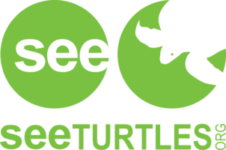 see turtles org